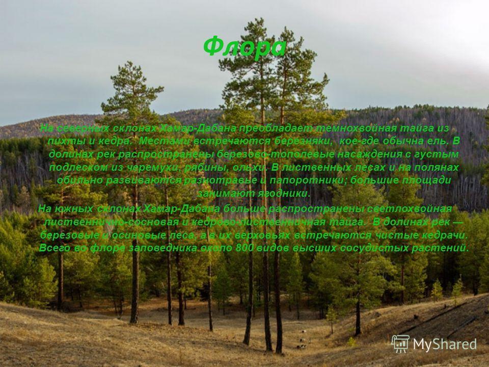 Флора На северных склонах Хамар-Дабана преобладает темнохвойная тайга из пихты и кедра. Местами встречаются березняки, кое-где обычна ель. В долинах рек распространены березово-тополевые насаждения с густым подлеском из черемухи, рябины, ольхи. В лис