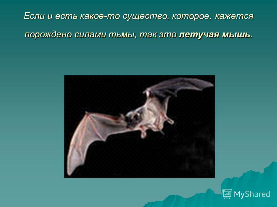 Если и есть какое-то существо, которое, кажется порождено силами тьмы, так это летучая мышь.