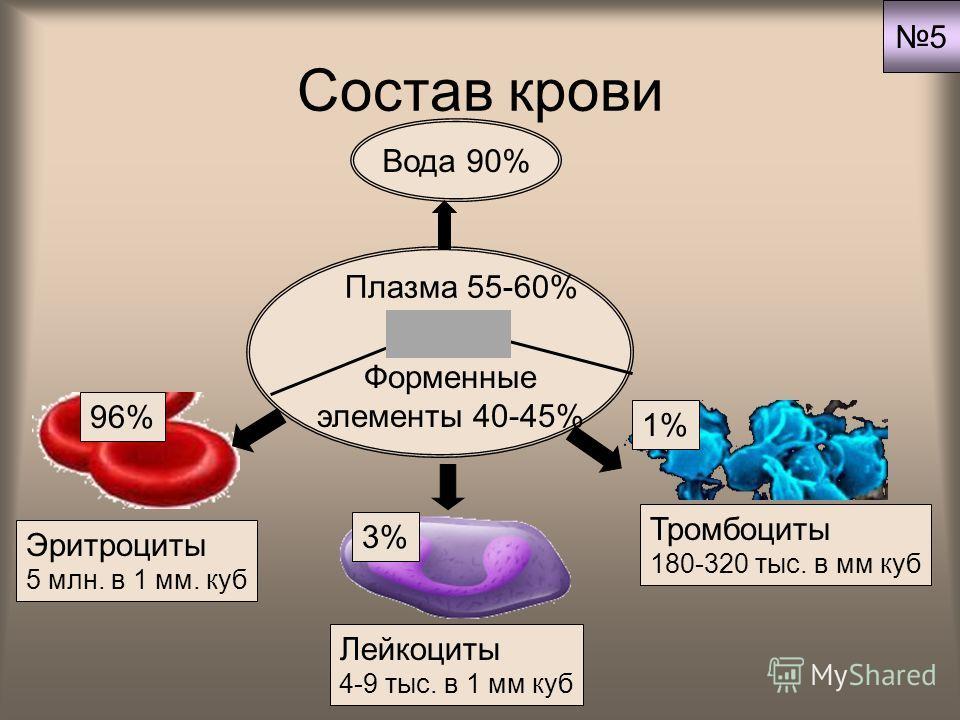 Состав крови Форменные элементы 40-45% Плазма 55-60% Вода 90% Эритроциты 5 млн. в 1 мм. куб Лейкоциты 4-9 тыс. в 1 мм куб Тромбоциты 180-320 тыс. в мм куб 96% 3% 1% 5