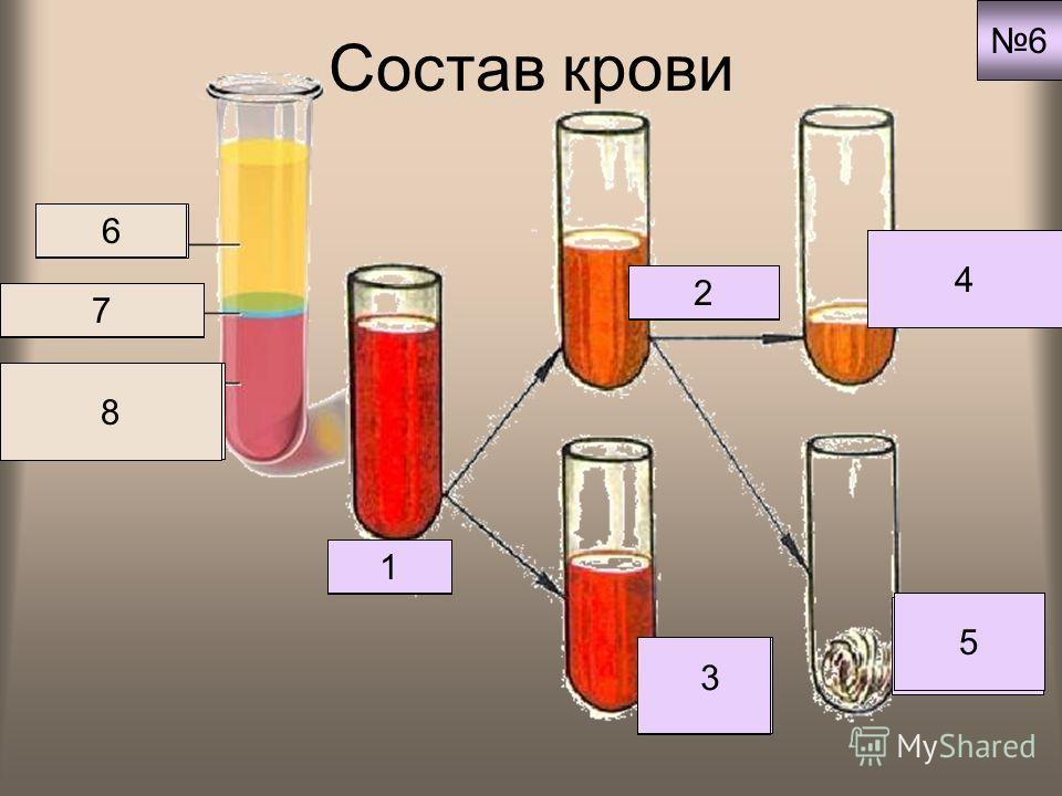 Состав крови Кровь 1 Плазма 2 Клетки крови 3 Кровяная сыворотка 4 Белок фибрин 5 Плазма 6 Лейкоциты 7 Эритроциты тромбоциты 6 8