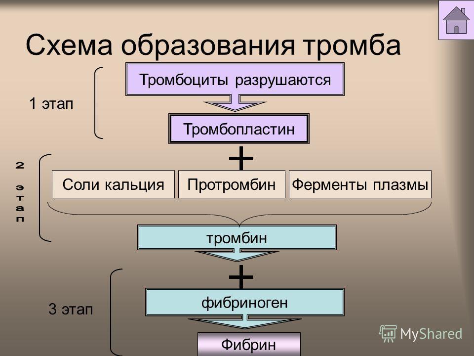 Схема образования тромба Тромбоциты разрушаются Тромбопластин тромбин Фибрин Ферменты плазмы Соли кальция Протромбин фибриноген 1 этап 3 этап