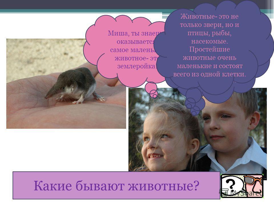 Миша, ты знаешь, оказывается, самое маленькое животное- это землеройка! Ты, наверное, невнимательно читала. Землеройка- самый маленький зверёк, млекопитающее. Животные- это не только звери, но и птицы, рыбы, насекомые. Простейшие животные очень мален