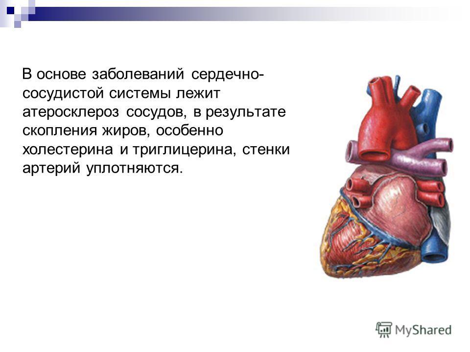 В основе заболеваний сердечно- сосудистой системы лежит атеросклероз сосудов, в результате скопления жиров, особенно холестерина и триглицерина, стенки артерий уплотняются.