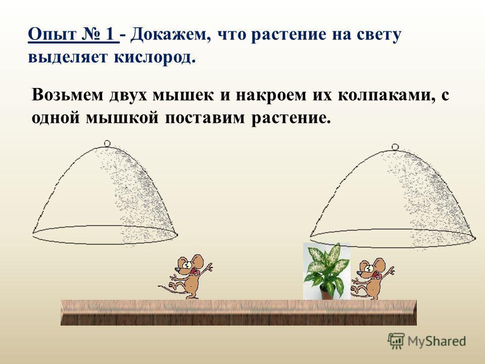 Возьмем двух мышек и накроем их колпаками, с одной мышкой поставим растение. Опыт 1 - Докажем, что растение на свету выделяет кислород.