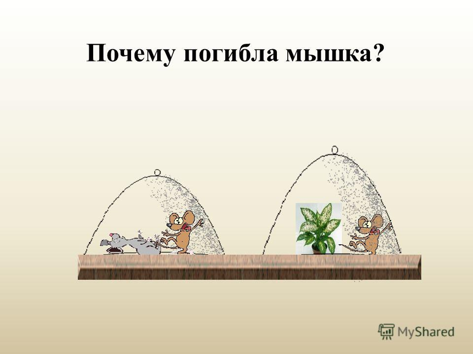 Почему погибла мышка?