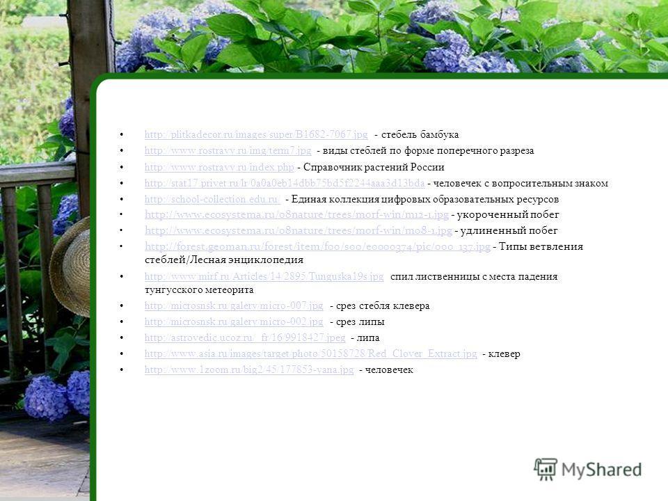 http://plitkadecor.ru/images/super/B1682-7067. jpg - стебель бамбукаhttp://plitkadecor.ru/images/super/B1682-7067. jpg http://www.rostravy.ru/img/term7. jpg - виды стеблей по форме поперечного разрезаhttp://www.rostravy.ru/img/term7. jpg http://www.r