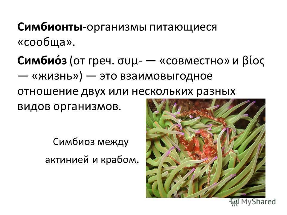 Симбионты-организмы питающиеся «сообща». Симбио́з (от греч. συμ- «совместно» и βίος «жизнь») это взаимовыгодное отношение двух или нескольких разных видов организмов. Симбиоз между актинией и крабом.