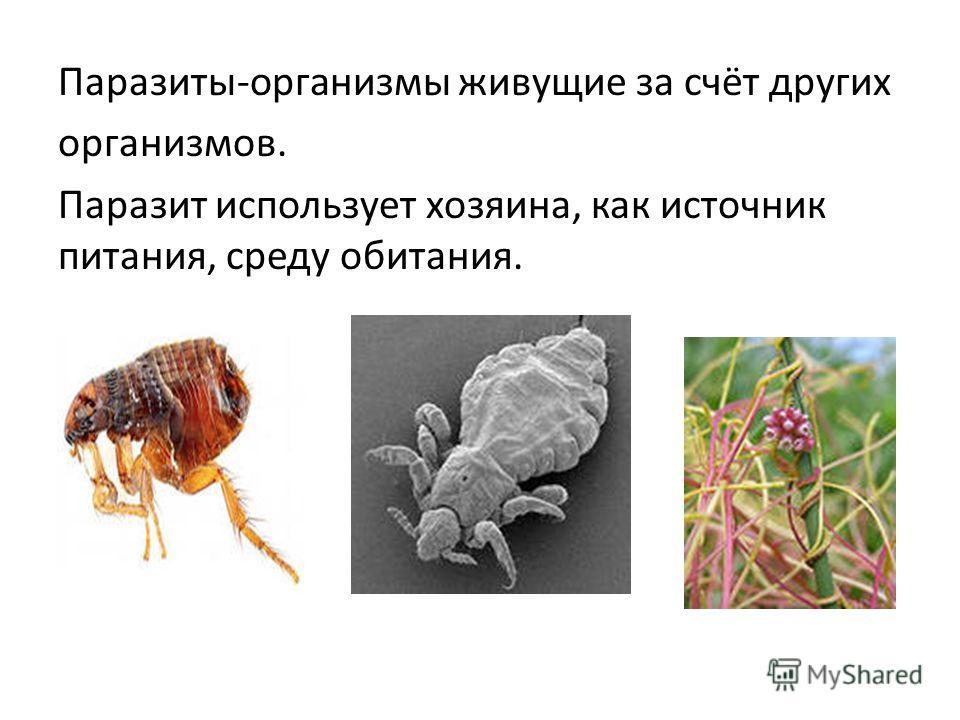 Паразиты-организмы живущие за счёт других организмов. Паразит использует хозяина, как источник питания, среду обитания.