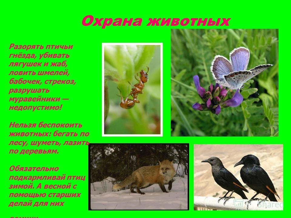 Охрана животных Разорять птичьи гнёзда, убивать лягушек и жаб, ловить шмелей, бабочек, стрекоз, разрушать муравейники недопустимо! Нельзя беспокоить животных: бегать по лесу, шуметь, лазить по деревьям. Обязательно подкармливай птиц зимой. А весной с