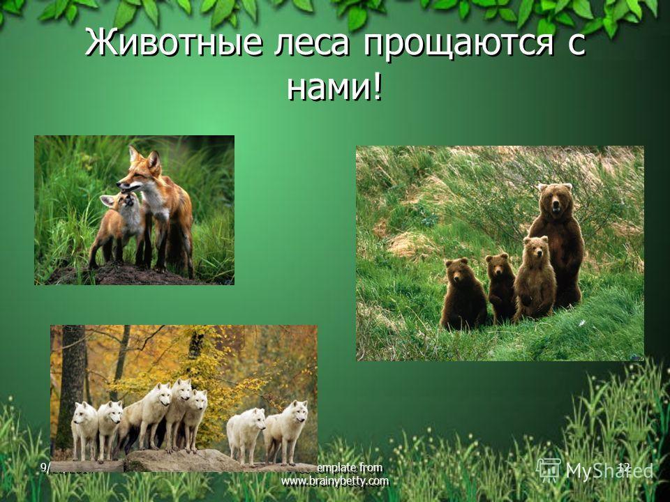 Животные леса прощаются с нами! 9/22/2014Free template from www.brainybetty.com 12
