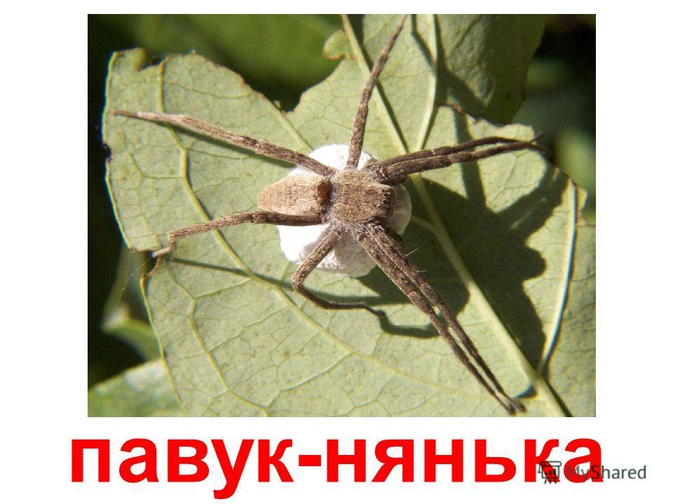 павук-клоун