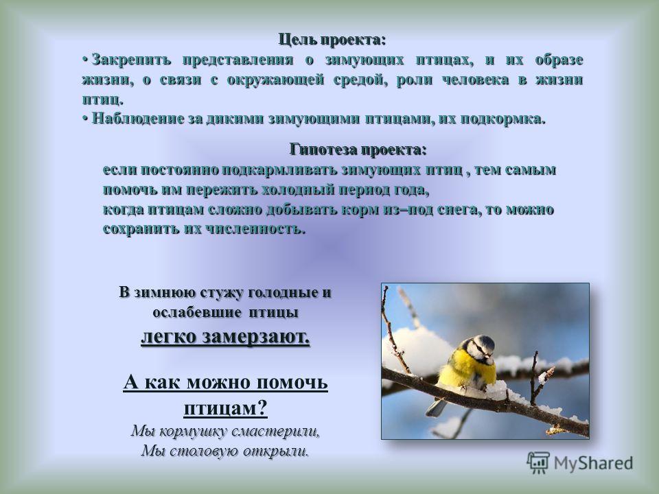 В зимнюю стужу голодные и ослабевшие птицы легко замерзают. А как можно помочь птицам? Мы кормушку смастерили, Мы столовую открыли. Цель проекта: Закрепить представления о зимующих птицах, и их образе жизни, о связи с окружающей средой, роли человека