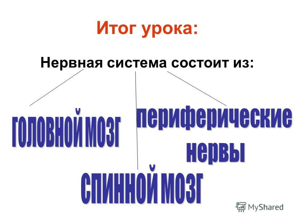 Итог урока: Нервная система состоит из: