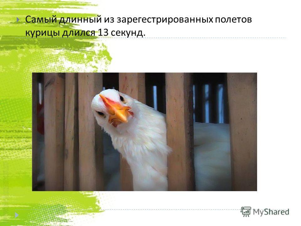Самый длинный из зарегистрированных полетов курицы длился 13 секунд.