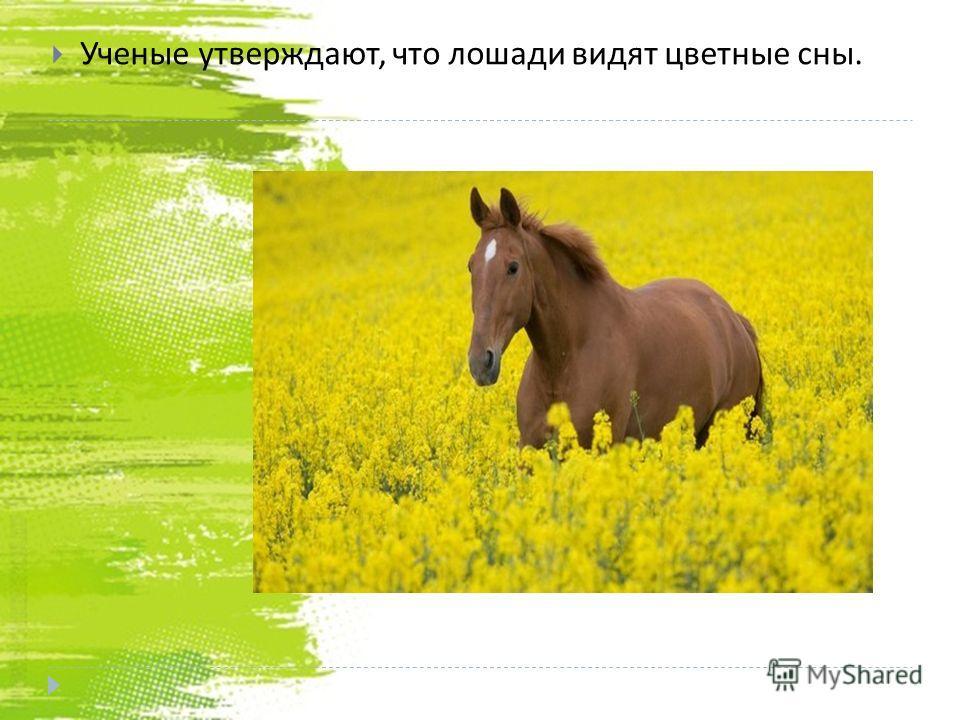 Ученые утверждают, что лошади видят цветные сны.