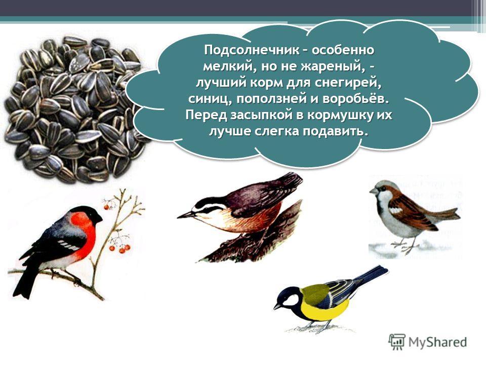 Кусочки сала годятся не всем птицам. Сало любят синички. Только сало не должно быть солёным. Овёс, пшено охотно съедят синицы, воробьи.