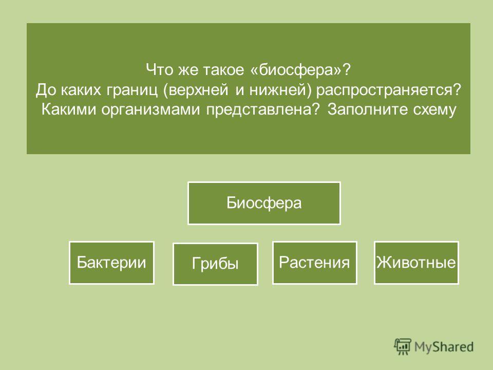 Биосфера Бактерии Что же такое «биосфера»? До каких границ (верхней и нижней) распространяется? Какими организмами представлена? Заполните схему Биосфера Бактерии Грибы Растения Животные