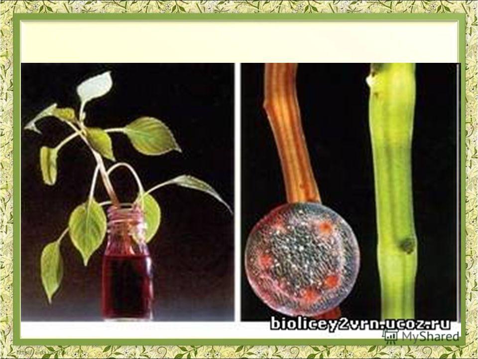 У растений передвижение веществ осуществляется по двум системам: СОСУДЫ ДРЕВЕСИНЫ (КСИЛЕМА) - вода и минеральные соли; СИТОВИДНЫЕ ТРУБКИ ЛУБА (ФЛОЭМА) - органические вещества.
