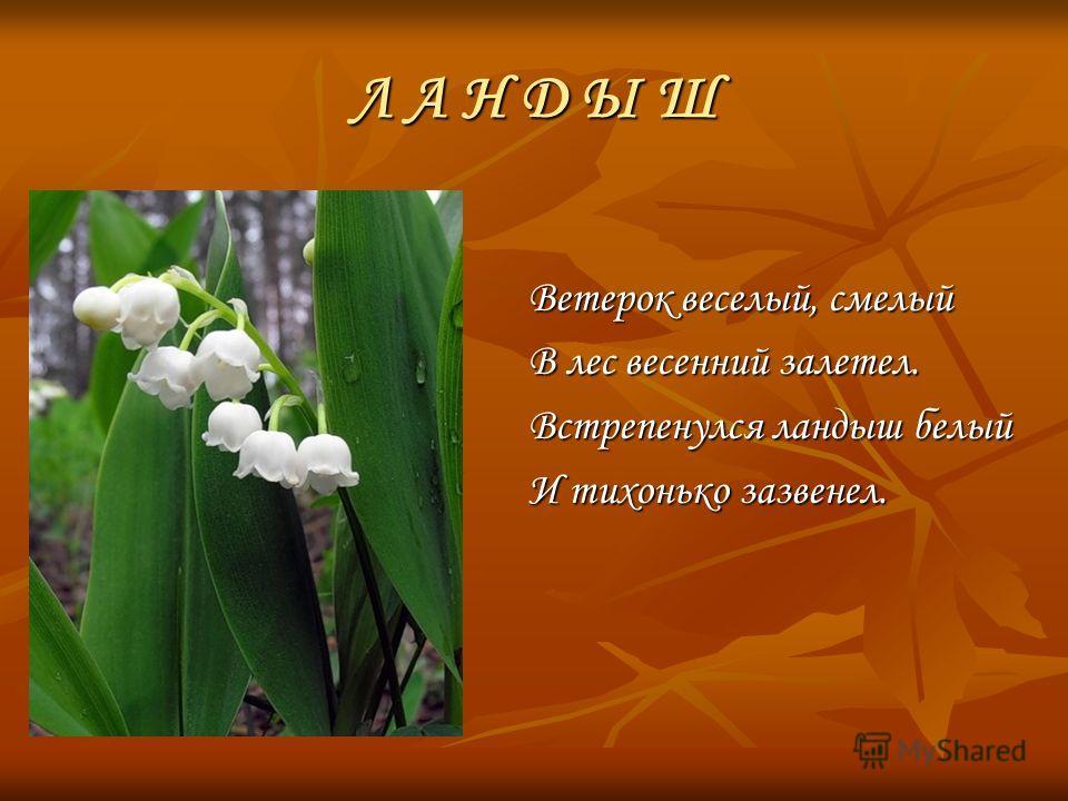 Ветерок веселый, смелый В лес весенний залетел. Встрепенулся ландыш белый И тихонько зазвенел. Л А Н Д Ы Ш
