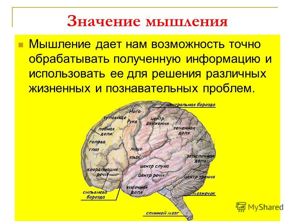 Значение мышления Мышление дает нам возможность точно обрабатывать полученную информацию и использовать ее для решения различных жизненных и познавательных проблем.