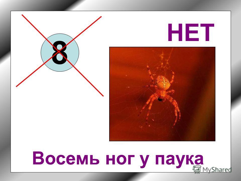 Сколько ног у насекомых? 2 4 6 8