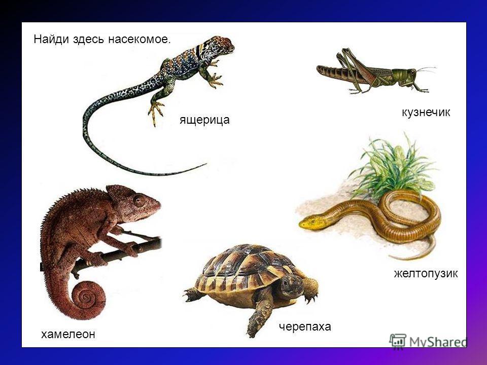 НАСЕКОМЫЕ А. Яранова www.forchel.ru