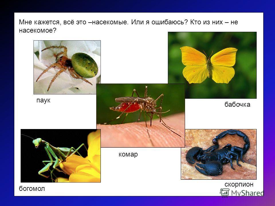 Скорпион – это насекомое. НЕТ