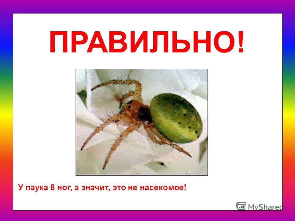 Мне кажется, всё это –насекомые. Или я ошибаюсь? Кто из них – не насекомое? паук богомол комар бабочка скорпион