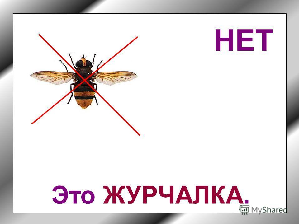 Угадай, какое из этих насекомых называется шмель?