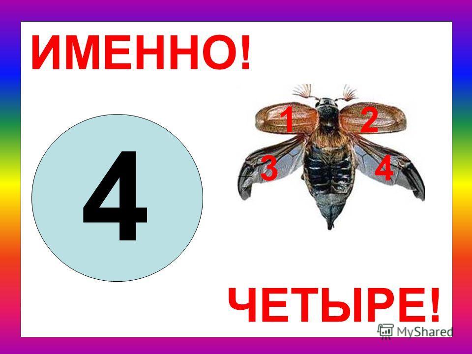 Призадумайся слегка: сколько крыльев у жука? 2 4