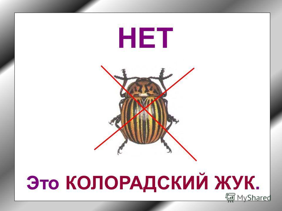 Кто-то их них не жук. Но кто?