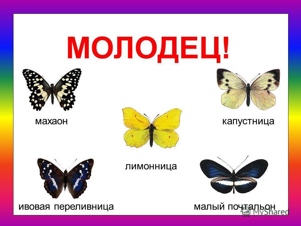 Как ты думаешь, какая из этих бабочек называется ЛИМОННИЦА?