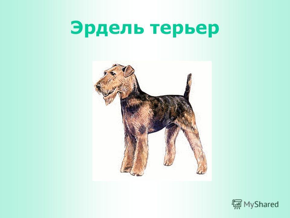 ПОРОДЫ СОБАК Виктория Кузнецова