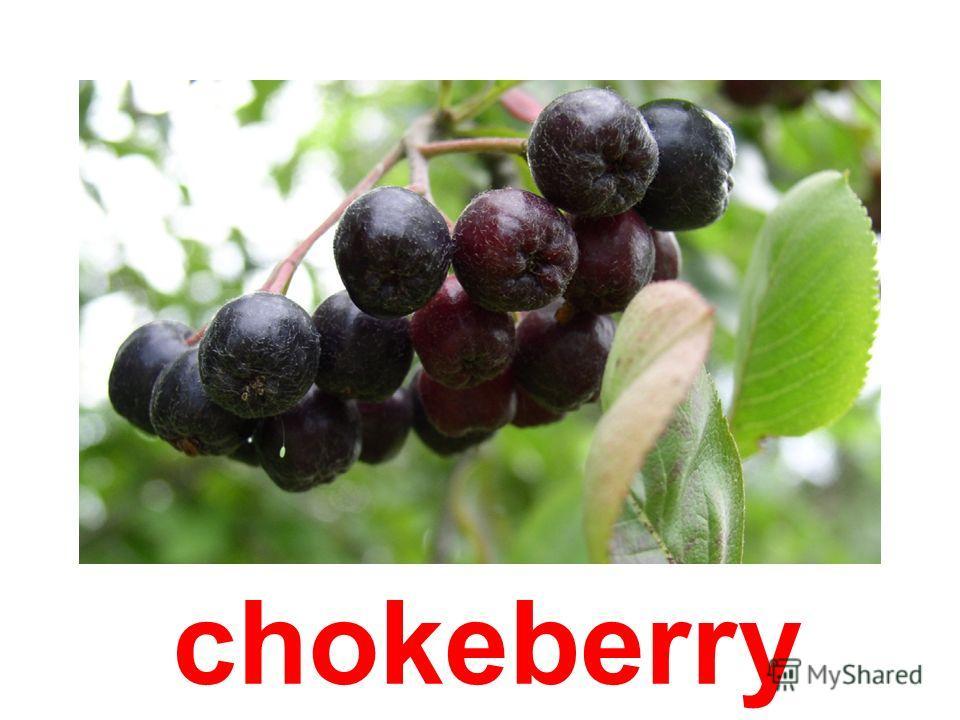 ash-berries