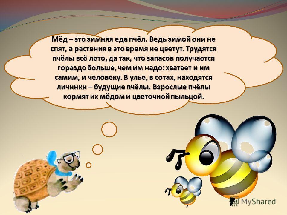 Мёд – это зимняя еда пчёл. Ведь зимой они не спят, а растения в это время не цветут. Трудятся пчёлы всё лето, да так, что запасов получается гораздо больше, чем им надо: хватает и им самим, и человеку. В улье, в сотах, находятся личинки – будущие пчё