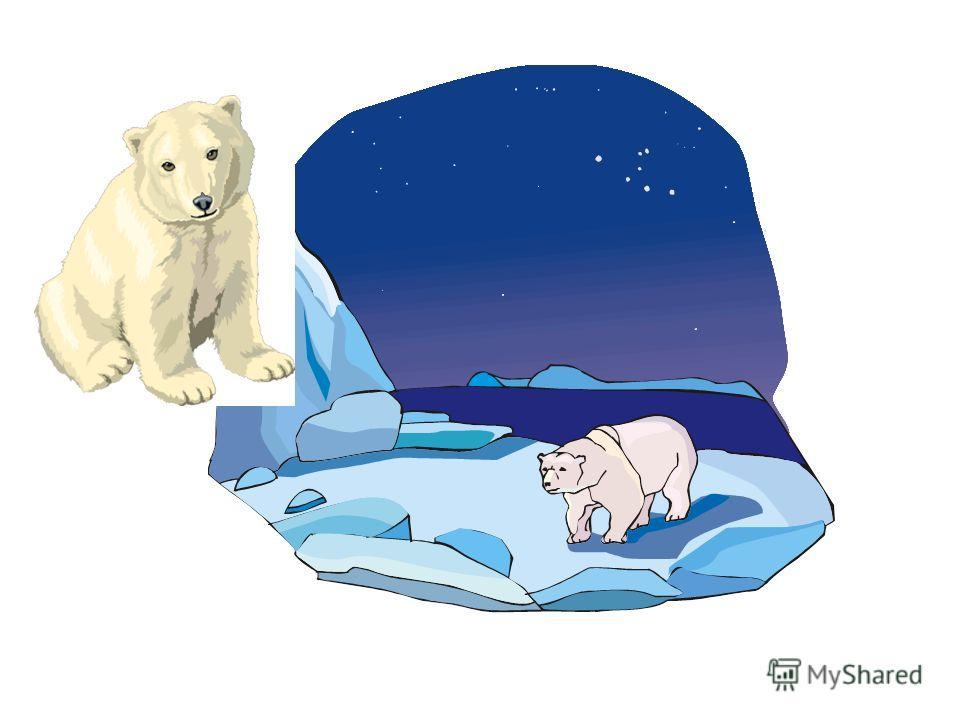Дикие животные Дикие животные «белый медведь, верблюд, обезьяна» часть 2
