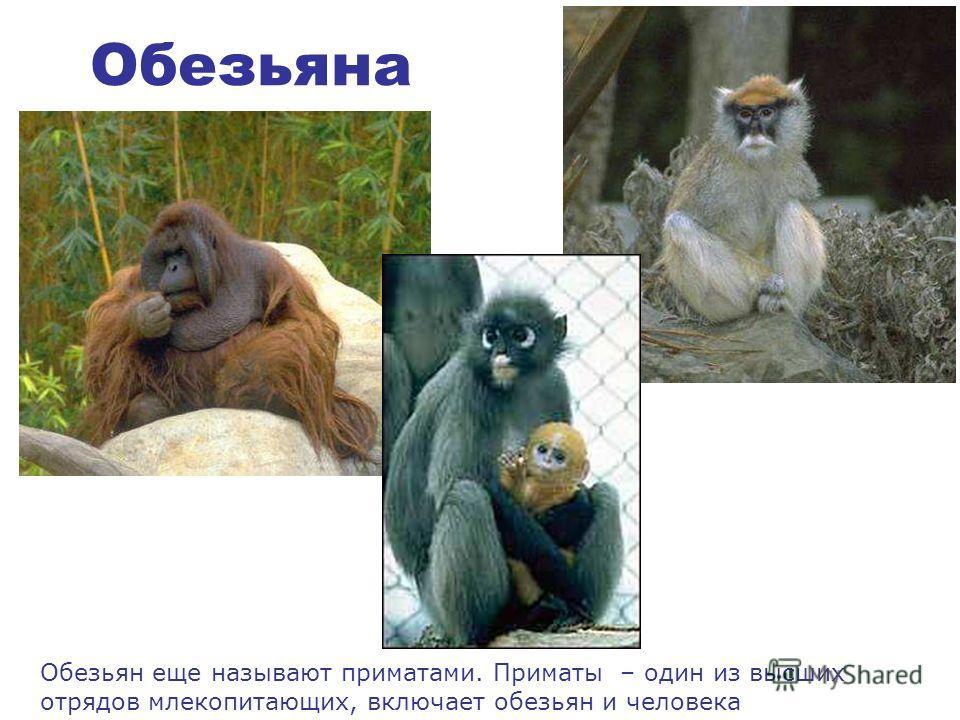 Самый известный белый медведь – это умка, знаешь такого?)) По- чукотский имя «умка» означает – взрослый белый медведь-самец.