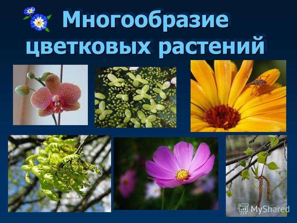 Реферат по биологии для 6 класса на тему цветковые растения