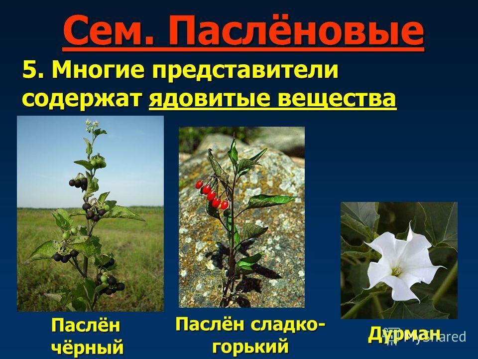 Сем. Паслёновые 5. Многие представители содержат ядовитые вещества Паслён чёрный Паслён сладко- горький Дурман