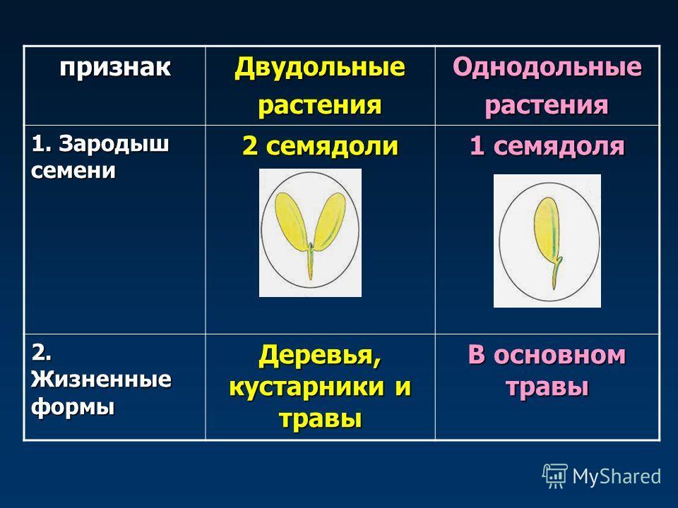 признак ДвудольныерастенияОднодольныерастения 1. Зародыш семени 2 семядоли 1 семядоля 2. Жизненные формы Деревья, кустарники и травы В основном травы