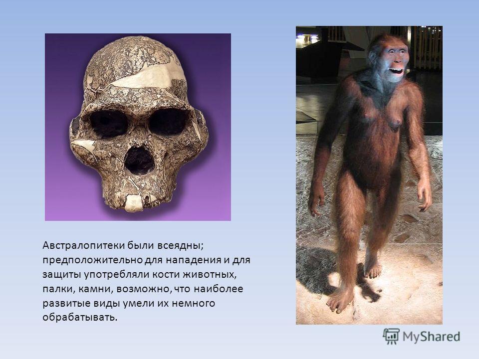 Австралопитеки были всеядны; предположительно для нападения и для защиты употребляли кости животных, палки, камни, возможно, что наиболее развитые виды умели их немного обрабатывать.