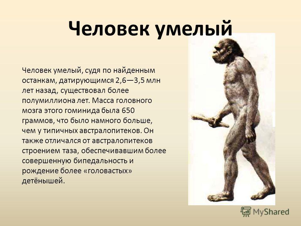 Человек умелый, судя по найденным останкам, датирующимся 2,63,5 млн лет назад, существовал более полумиллиона лет. Масса головного мозга этого гоминида была 650 граммов, что было намного больше, чем у типичных австралопитеков. Он также отличался от а