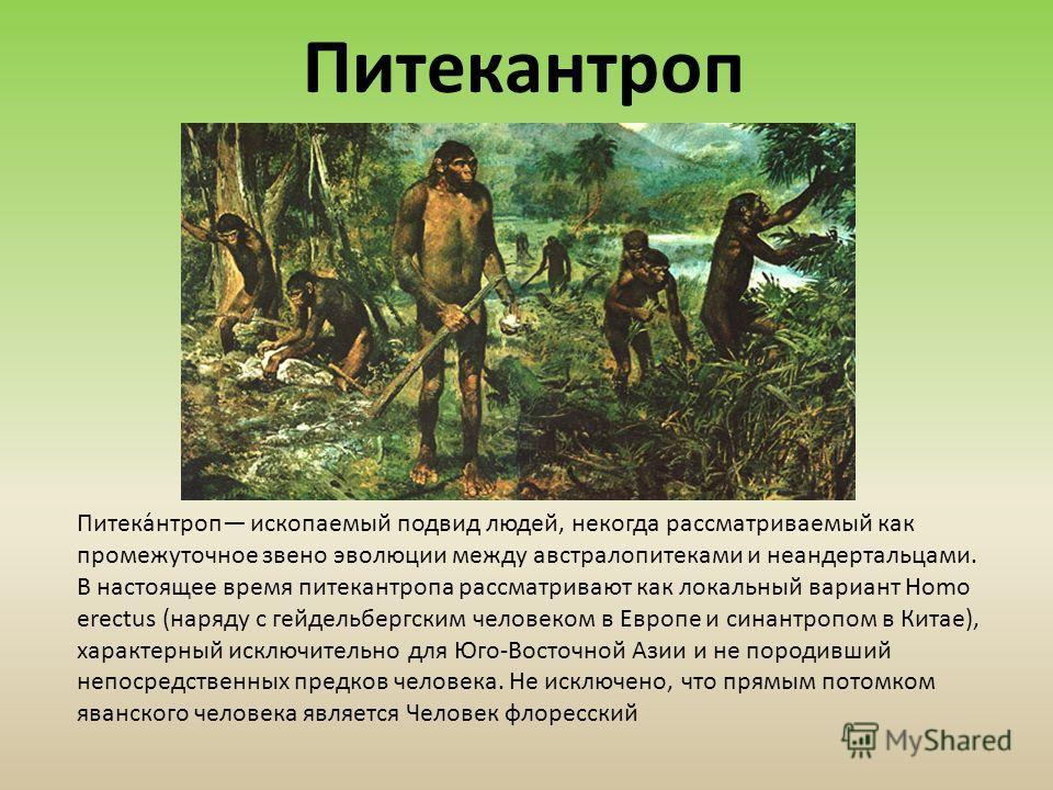Питека́нтроп ископаемый подвид людей, некогда рассматриваемый как промежуточное звено эволюции между австралопитеками и неандертальцами. В настоящее время питекантропа рассматривают как локальный вариант Homo erectus (наряду с гейдельбергским человек