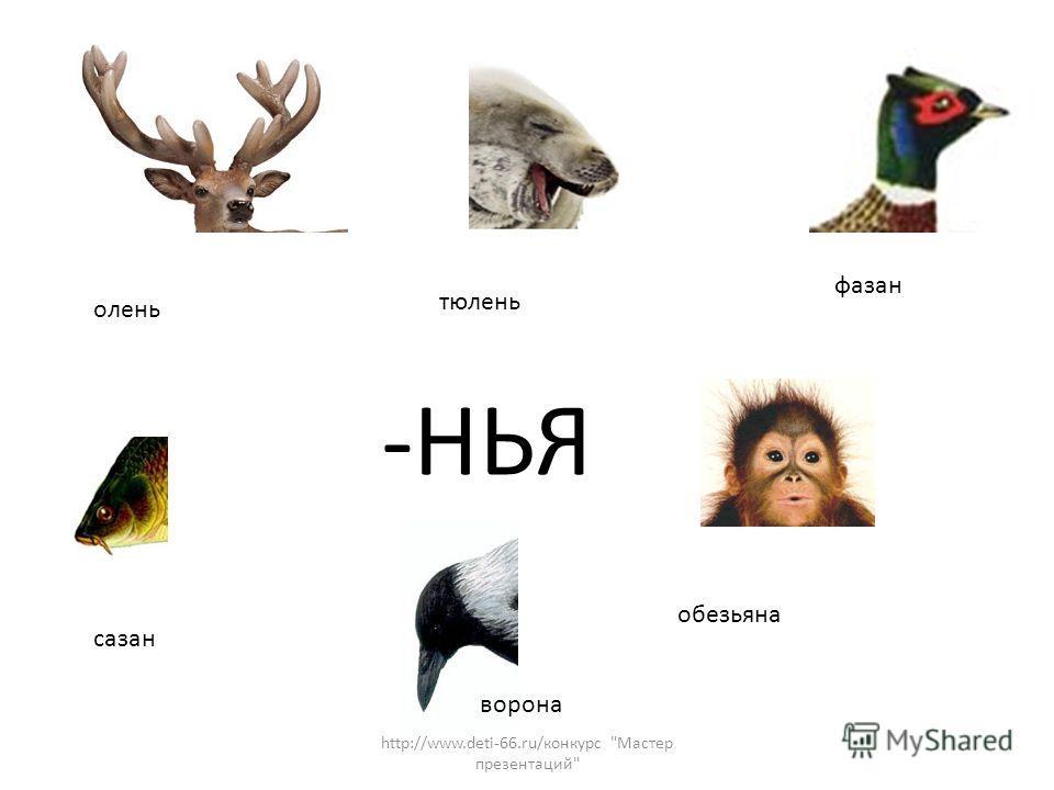 -НЬЯ олень тюлень ворона фазан сазан обезьяна http://www.deti-66.ru/конкурс Мастер презентаций