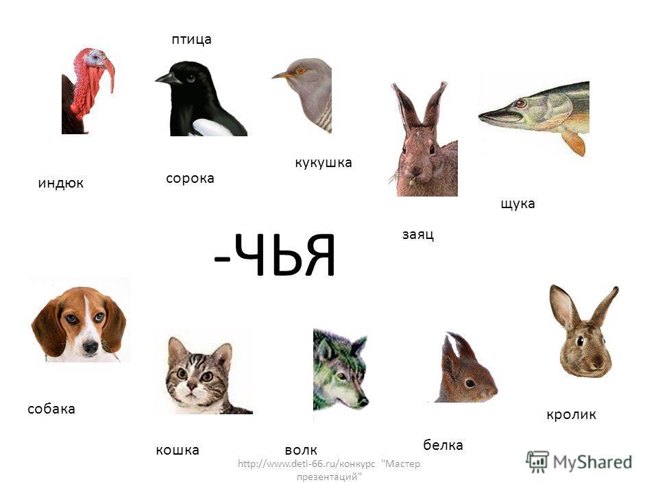 -ЧЬЯ индюк сорока кукушка птица щука собака кошка волк белка кролик заяц http://www.deti-66.ru/конкурс Мастер презентаций