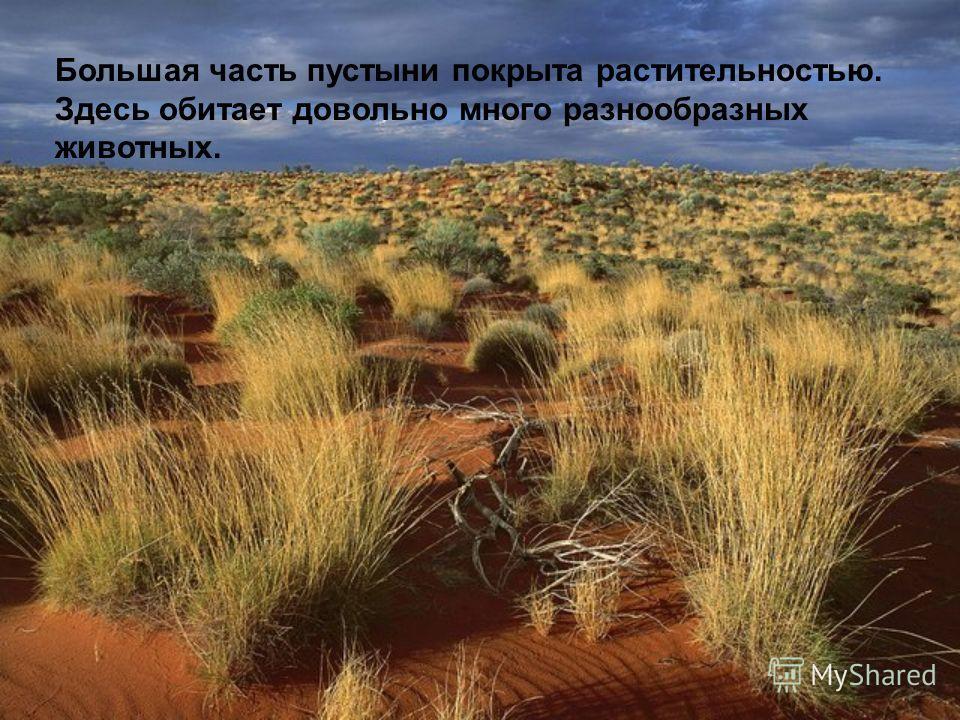 Большая часть пустыни покрыта растительностью. Здесь обитает довольно много разнообразных животных.