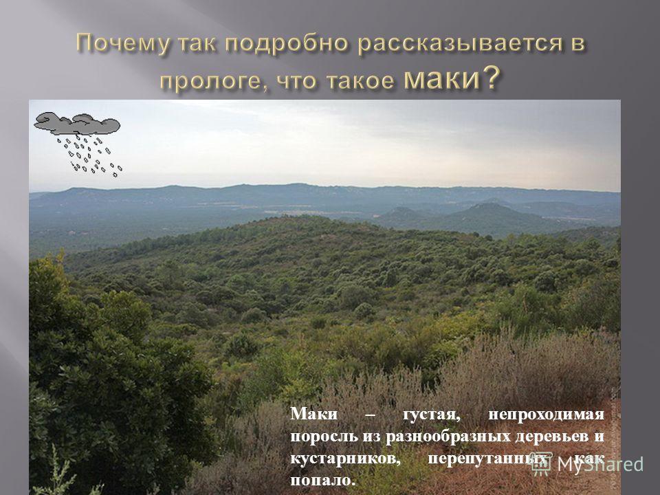 Маки – густая, непроходимая поросль из разнообразных деревьев и кустарников, перепутанных как попало.