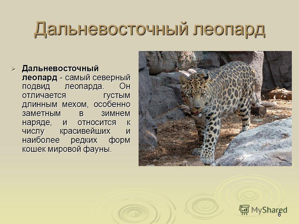 задачи, красная книга о леопарде для повседневной носки