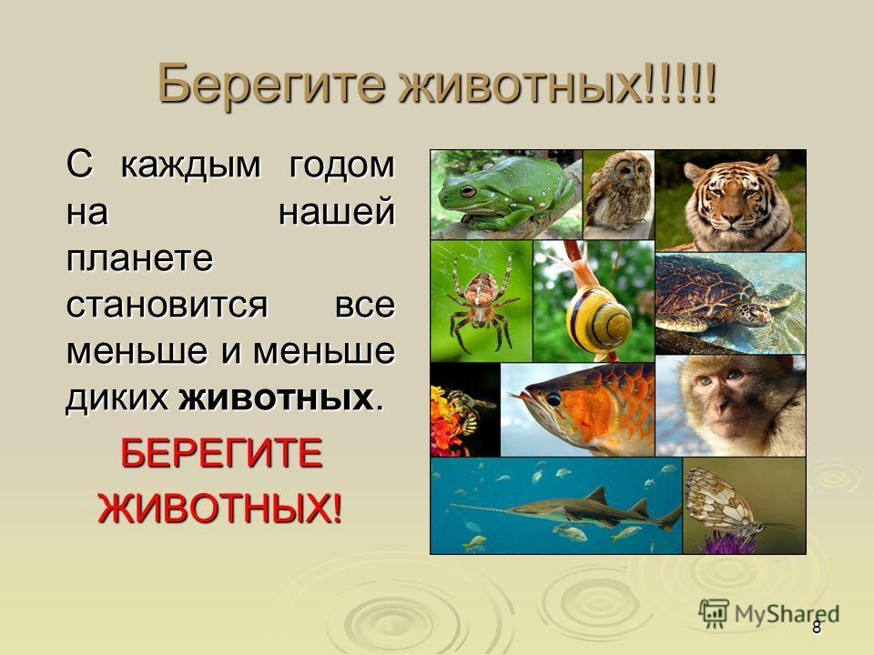 8 Берегите животных!!!!! С каждым годом на нашей планете становится все меньше и меньше диких животных. С каждым годом на нашей планете становится все меньше и меньше диких животных. БЕРЕГИТЕ БЕРЕГИТЕ ЖИВОТНЫХ! ЖИВОТНЫХ!