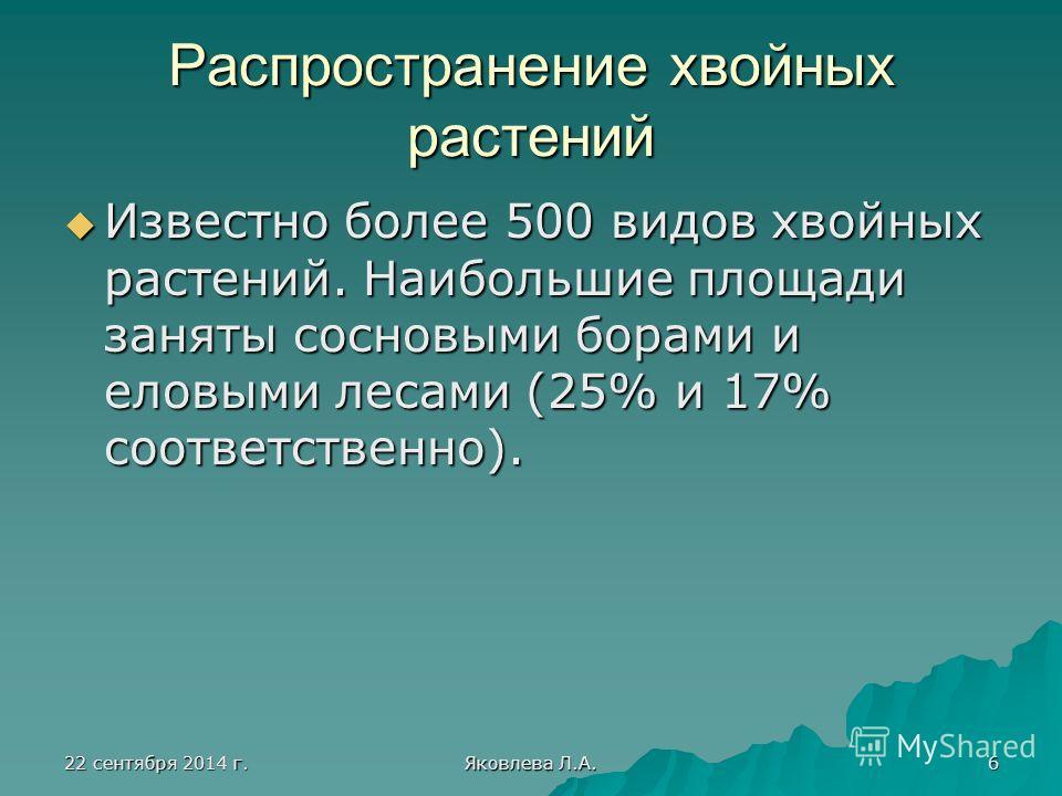 22 сентября 2014 г.22 сентября 2014 г.22 сентября 2014 г.22 сентября 2014 г. Яковлева Л.А. 6 Распространение хвойных растений Известно более 500 видов хвойных растений. Наибольшие площади заняты сосновыми борами и еловыми лесами (25% и 17% соответств
